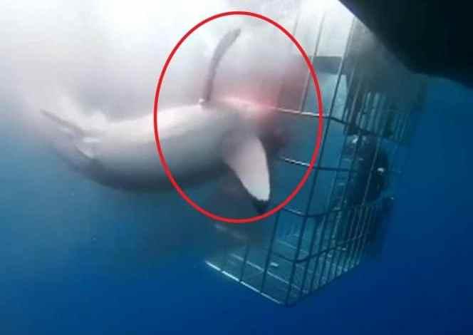 Photo of Responde empresa al incidente del tiburón blanco en Isla Guadalupe