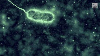 Photo of Reportan muertes por bacteria 'comecarne' en San Diego