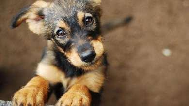 Photo of Regalarán tres meses de cerveza a quien adopte perro en cuarentena