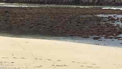 Photo of Mar se aleja de Huatulco tras el terremoto
