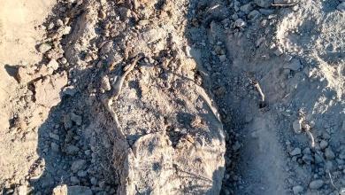 Photo of Localizan cuatro cadáveres en otra fosa clandestina de Tijuana