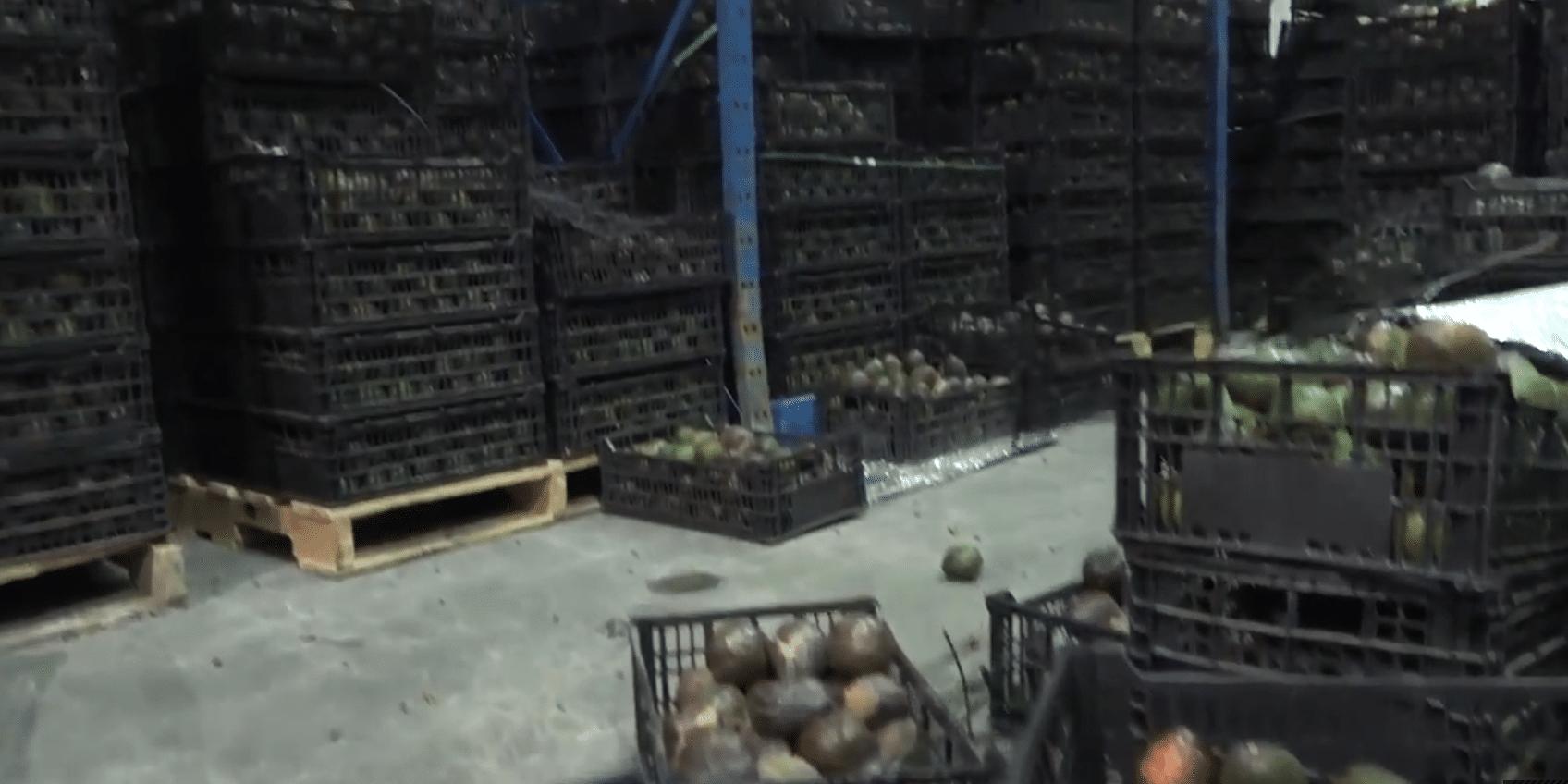 michoacanos-rematan-toneladas-de-aguacate-que-no-les-compraron