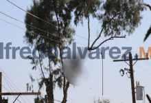 Photo of Muere electrocutado al podar un árbol