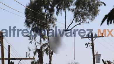 Muere-electrocutado-al-podar-un-árbol