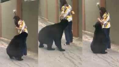 Photo of VIDEO: De nueva cuenta captan a oso ahora en plena calle