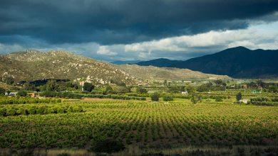 Photo of Valle de Guadalupe con cadenas de transmisión de covid-19