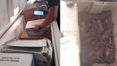 Confiscan-más-de-una-tonelada-de-productos-pesqueros