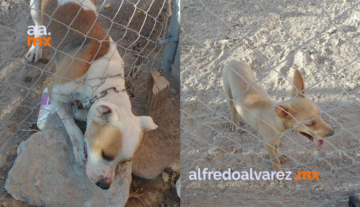 Aseguran-a-perros-tras-sufrir-maltrato