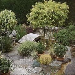 Asian Influenced Garden