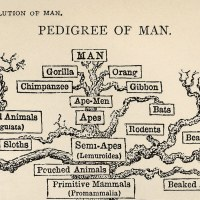 Freemasons in Early Alfreton - Geneaology