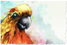 """A Digital Paint Cockatoo"" Sketch, and Adobe Photoshop ©Alf Sukatmo. 2016"