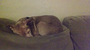 All is well in Malibu's world once again...she's snoring like a freight train. :)