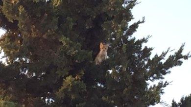 Photo of الدفاع المدني ينقذ قطة علقت على شجرة في المفرق – صور