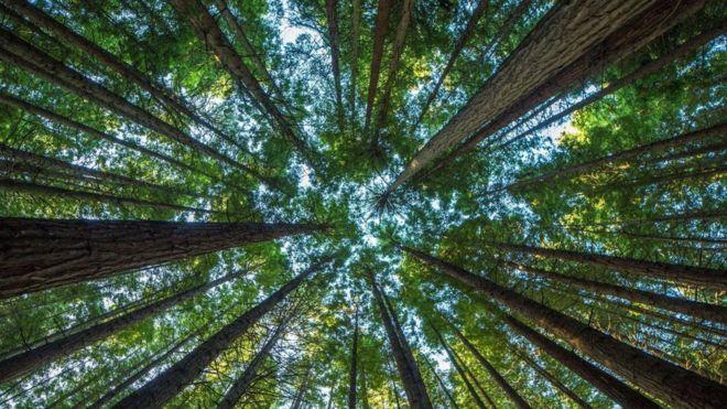 Photo of ماذا سيحدث لو اختفت الأشجار من على وجه الأرض؟