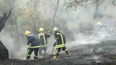 Photo of جرش: 150 طن حطب حصيلة الحرائق والأغصان المتكسرة للعام الحالي
