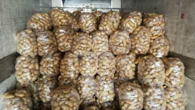 طريقة تخزين كميات من البطاطا في أحد المستودعات - من المصدر