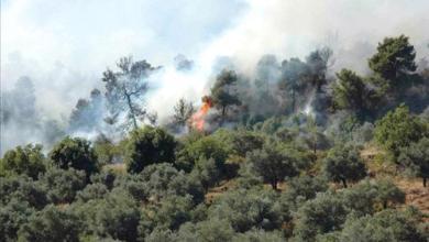 Photo of حريق يأتي على 20 دونماً في عجلون