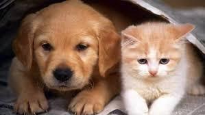 قطط وكلاب منزلية