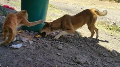 كلب وقطة يتنافسان على بقايا طعام