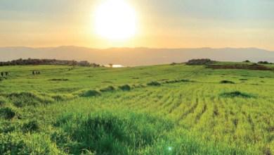 Photo of بشاير الربيع
