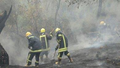 Photo of السيطرة على حريق أتى على 100 شجرة حرجية في جرش