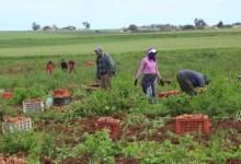 """Photo of طويقات: """"المخاطر الزراعية"""" يوسع مظلة تعويض المزارعين"""