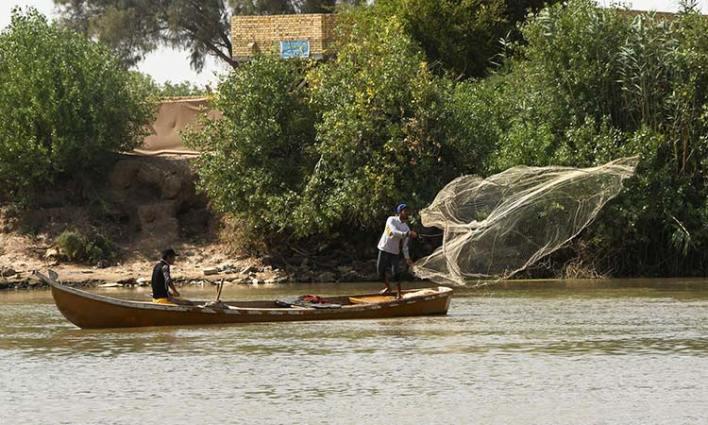 زهرة النيل تؤثر على الثروة لاسمكية في النيل في العراق