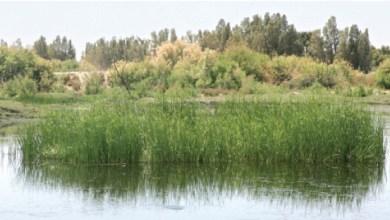 Photo of التحفيز المالي في تطوير سياحه البحيرات في الأردن