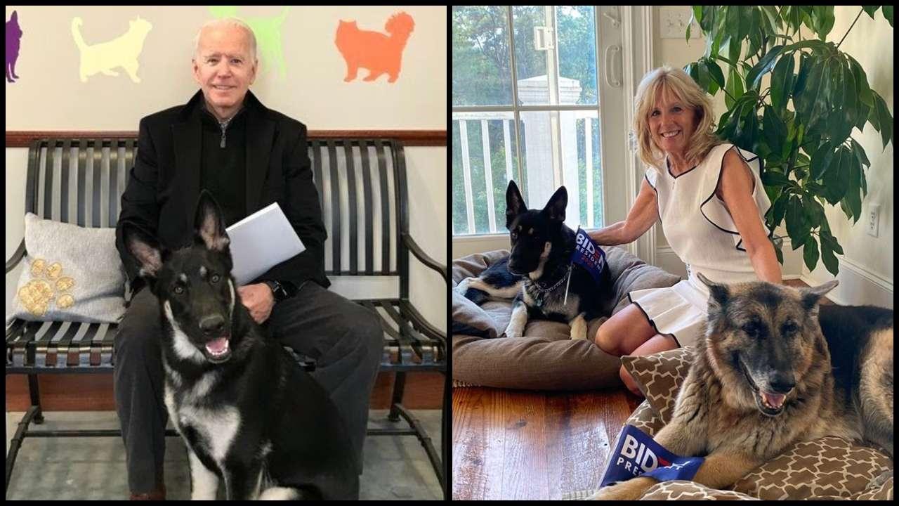 """وسيرافق الكلبان """"ميجر"""" و""""تشامب"""" وهما من فصيلة """"الراعي الألماني"""" عائلة بايدن لمقر إقامتهم الجديد"""