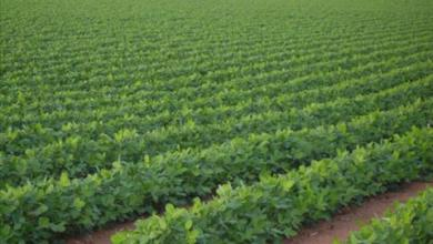 Photo of المزار الجنوبي: مساحات زراعية واسعة اضحت صحراء لغياب الاهتمام