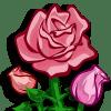 Pink Roses Categoria: Flowers Coste: 120 Tiempo crecimiento: 1 Dia 22 Horas Monedas que produce: 254 XP que produce: 2 Tamaño: 4x4