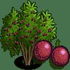 Passion Fruit Tree Regalo Monedas que produce: 93 Se vende por: 46