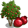Pomegranate Tree Regalo Monedas que produce: 108 Se vende por: 54