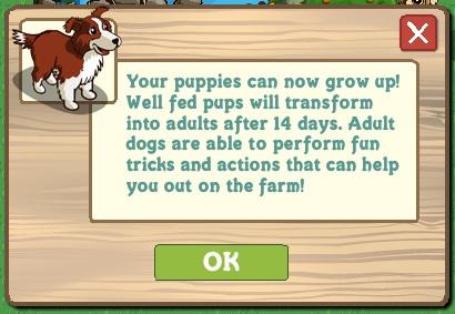 Perro adulto en Farmville
