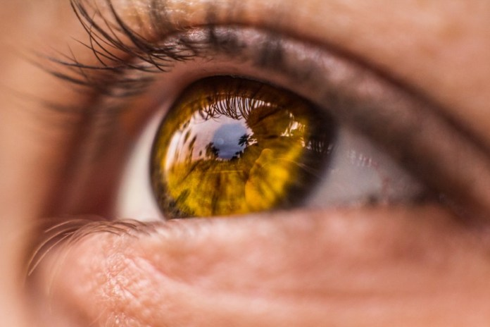 Idx Secures $33M for Developing AI Diagnostic Solutions for Detecting Eye Disease