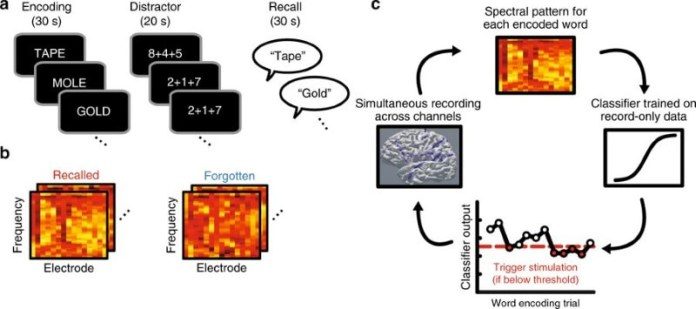 Closed-loop stimulation of temporal cortex rescues functional networks and improves memory