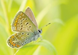 butterflies-95358__180