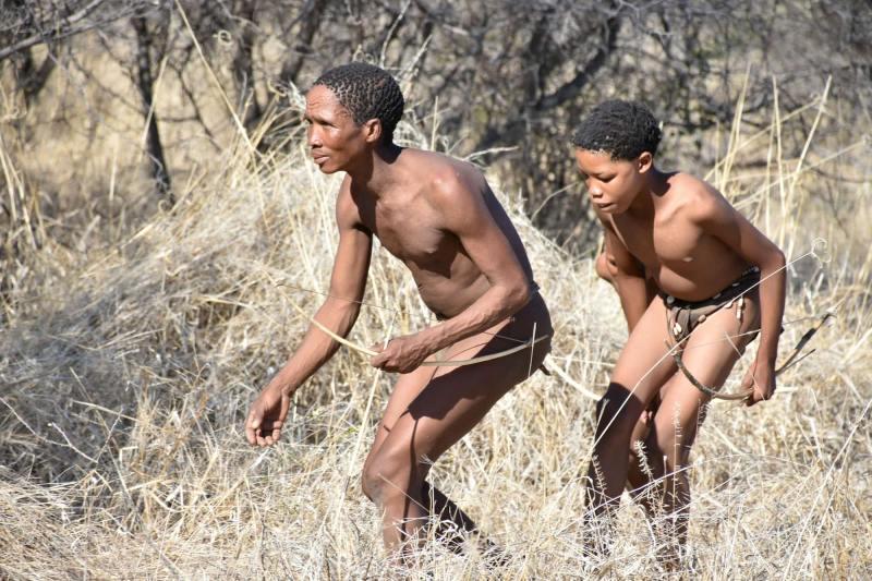בושמנים צדים נמביה