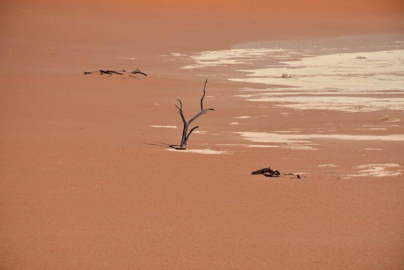 עץ בודד על רקע חולות המדבר