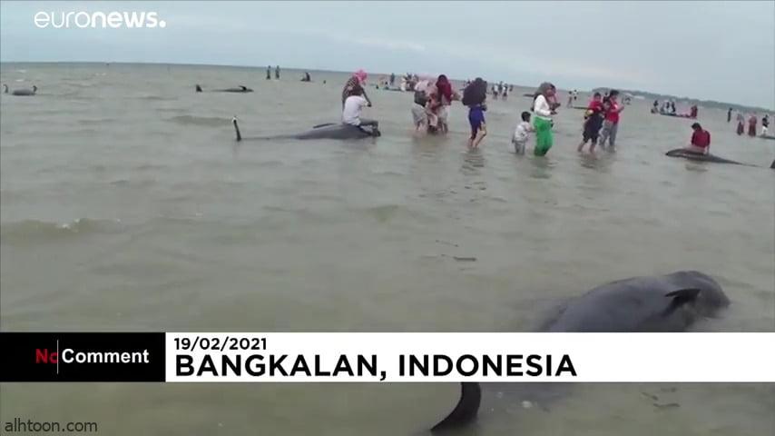 مشهد صادم .. بالفيديو: نفوق الحيان في إندونيسية - صحيفة هتون الدولية