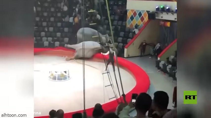 شاهد: فيلة تتعارك داخل سيرك - صحيفة هتون الدولية