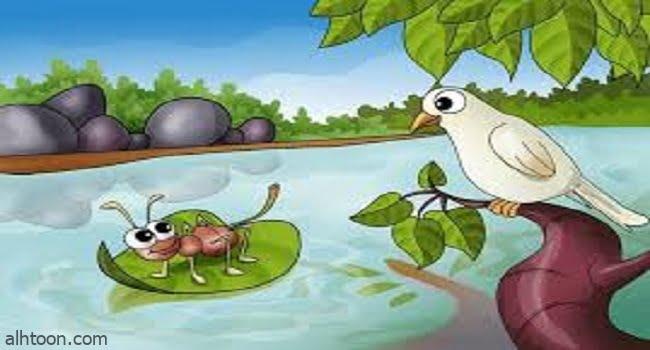 قصة الحمامة والنملة للاطفال - صحيفة هتون الدولية