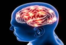 العلاقة بين مستوى الذكاء ونشاط الدماغ