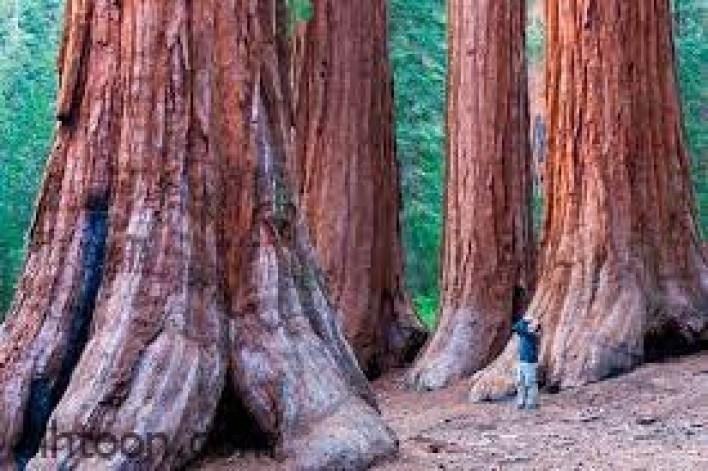 أجمل وأكبر غابات في العالم -صحيفة هتون الدولية
