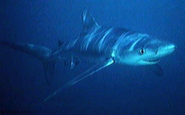 شاهد: شاب ينقذ سمكة قرش - صحيفة هتون الدولية