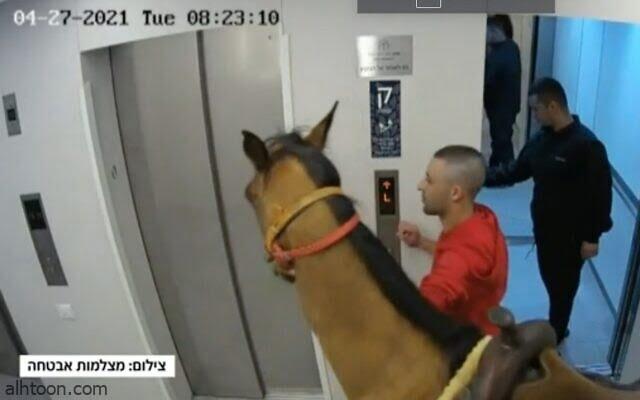 شاهد: شخص يصطحب حصان داخل المصعد - صحيفة هتون الدولية