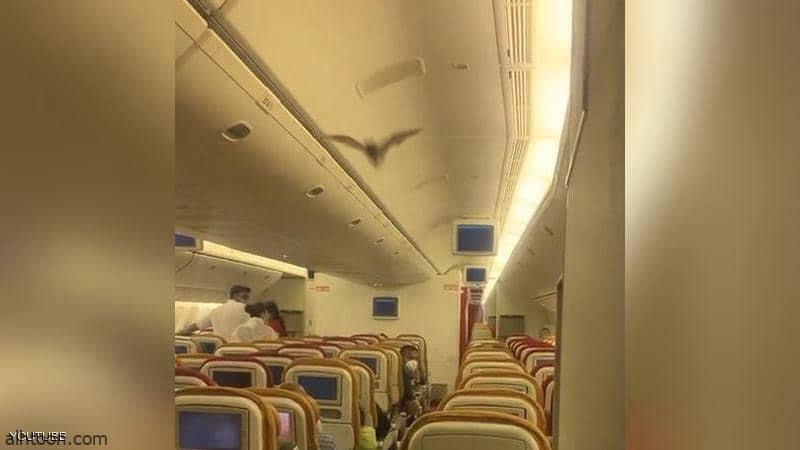 خفاش يبث الرعب لركاب طائرة - فيديو - صحيفة هتون الدولية