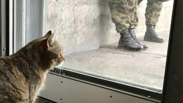 شاهد: حركات عسكرية من قطة - صحيفة هتون الدولية