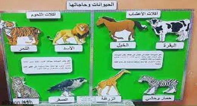 انشطة تعليمية للعلوم للاطفال -صحيفة هتون الدولية
