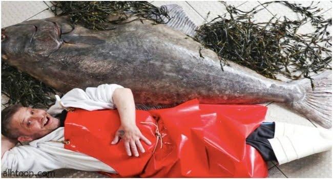 بائع سمك يستعين بأربعة رجال لنقل سمكة -صحيفة هتون الدولية